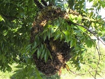 Tree Hive