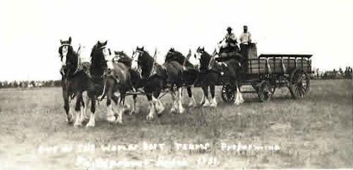 Six Horse Hitch (1)