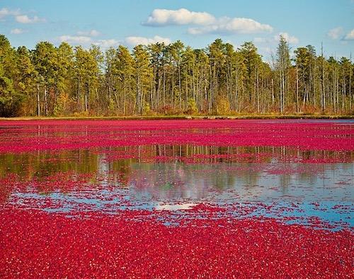 cranberry-bog-1