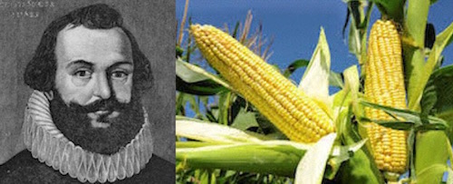Myles Standish New World maize